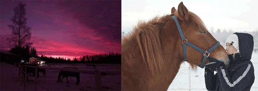 Krista Tirronen ja hevoset.