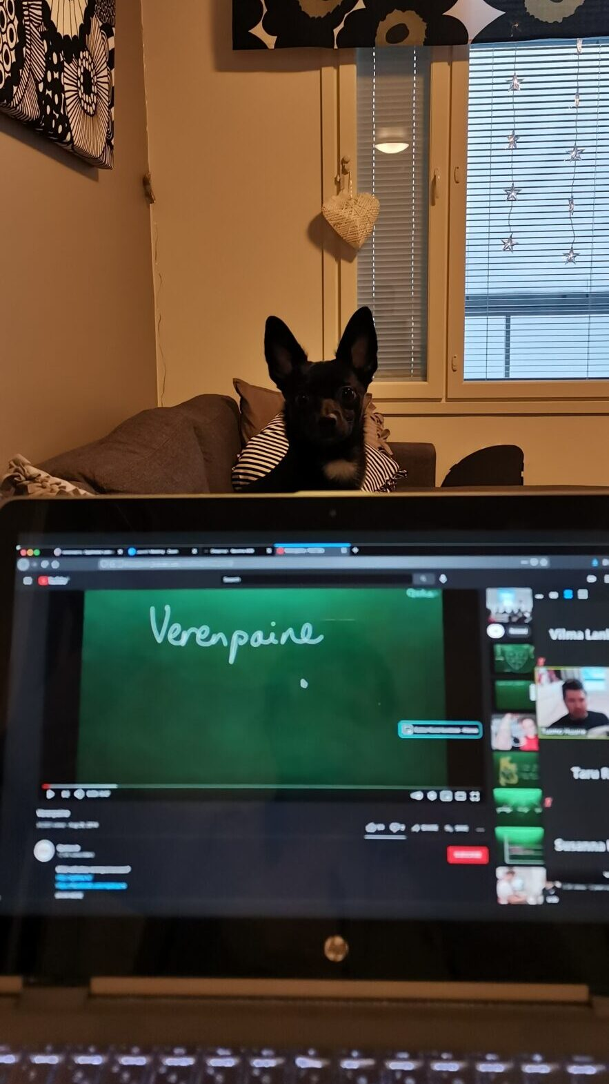 Koira kurkistaa tietokoneen näytön takaa.