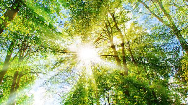 Auringon säteet siilautuvat puiden oksien välistä.