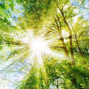 aurinko paistaa oksien lomasta