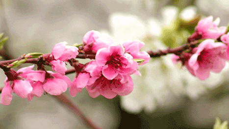 Kukka.