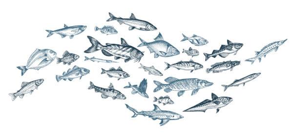 Kuvituskuva, jossa on useita piirrettyjä kaloja.