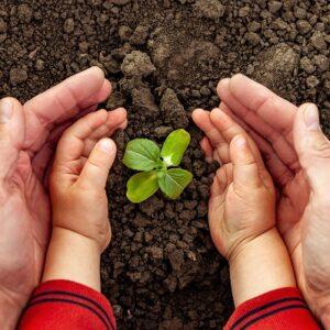 Kuvituskuva: maassa kasvaa kasvin verso ja sen ympärillä on lapsen sekä aikuisen kämmenet.