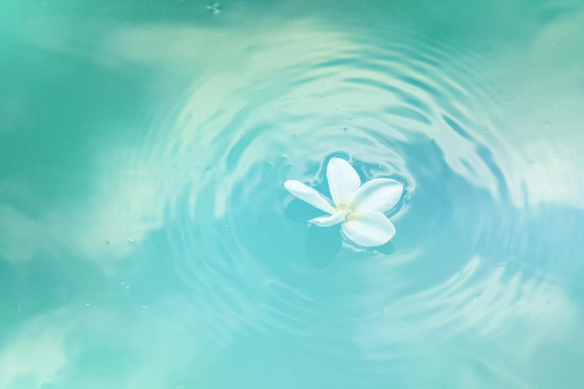 Kuvituskuva, jossa vaaleansinisessä vedessä kelluu valkoinen lumpeenkukka.