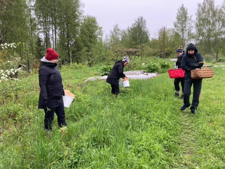 Kuvassa näkyy nelöjä ihmistä, joka ovat ulkona vehreässä maastossa korit tai sangot käsissään keräämässä villiyrttejä.